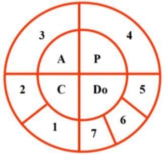 Ciclo CAPDo e suas 7 etapas Fonte: Bormio et al (2005).